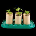 小小园丁种植温室